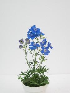 Delphinium Tiara Blue