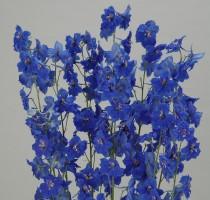Delphinium Tango Dark Blue