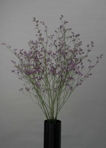 Limonium sp. Corona Purple