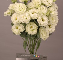 Lisianthus F1 Chaconne Green