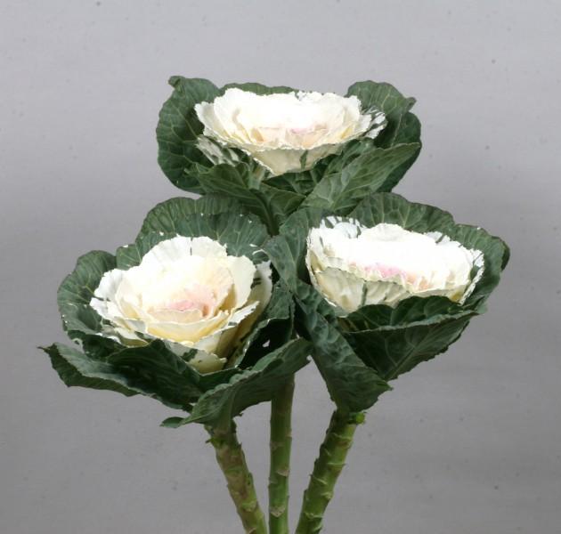 Brassica F1 Hakuju