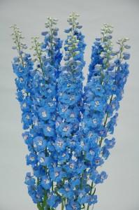 Delphinium F1 Triton Light Blue