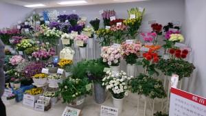 第66回関東東海花の展覧会_日本種苗協会展示ブース20170202